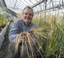 Chris Ridout with the Chevallier Barley.