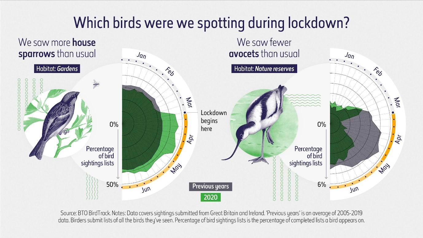 Bird sightings chart