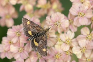 New report shows UK's moth population has declined by a third