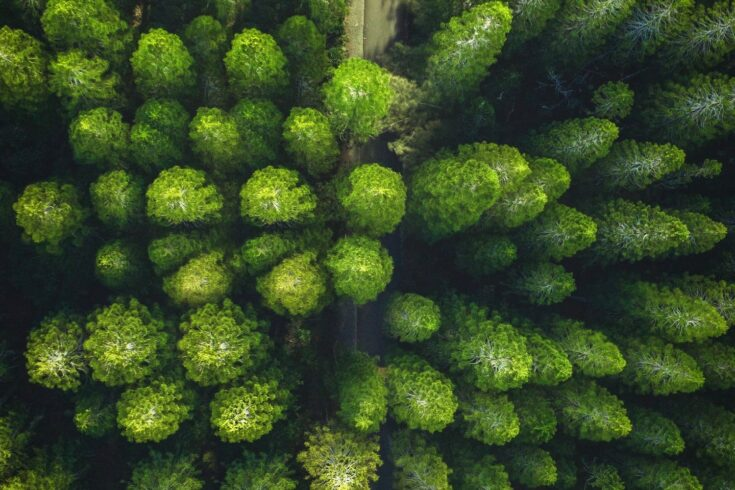 Aerial shot of trees in a forest