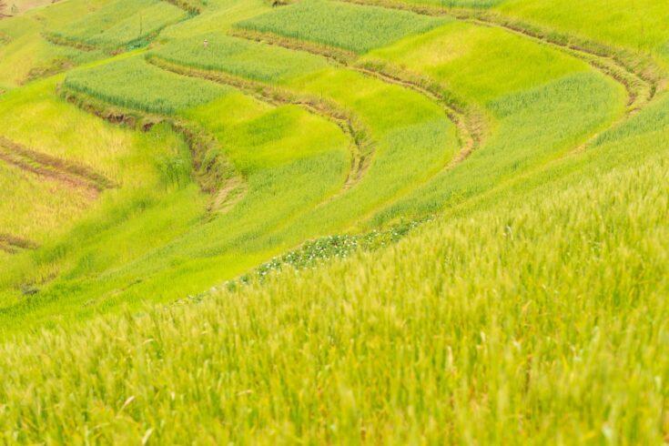 Green terraced field in Ethiopia