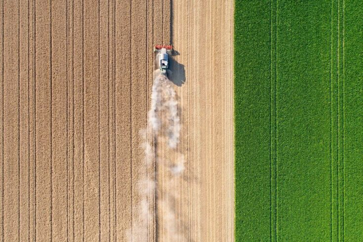 Harvesting a wheat field, dust clouds