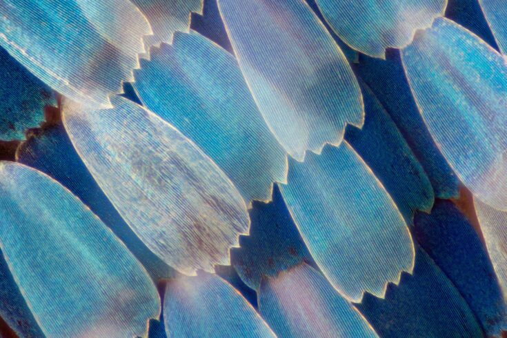 Extreme magnification - Butterfly wing under the microscope